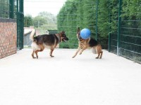 Kaiser and Jager play ball in one of our hree exercise area.